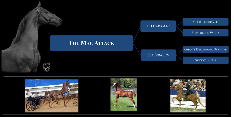 Mac Attack Banner 3